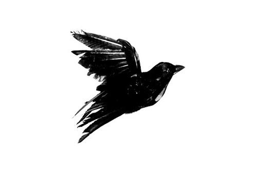 Blackbird - Tattoo.com